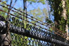 Barbed Wire (cori573) Tags: fence wire woods chain barbed