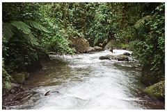 Nambillo River (Patrick J. Negwer) Tags: dog naturaleza verde green dogs nature water rio river waterfall ecuador agua perro perros cascadas mindo nambillo