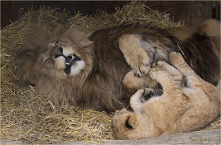 Dad is ticklish