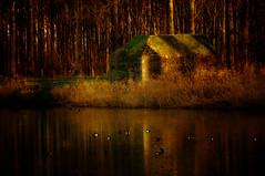 Bunker, Dordtse Biesbosch, Zuid- Holland. (Battle14) Tags: texture netherlands bunker dordrecht textured biesbosch pillbox niederlande nikond90