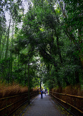 0985 (ken-wct) Tags: art nature japan nikon f14 sigma d750 30mm