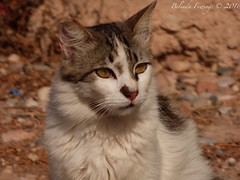 Cat of Torrevieja (Belinda Fewings (3 million views. Thank You)) Tags: street city colour beautiful beauty out outside outdoors seaside spain arty artistic bokeh creative best depthoffield espana colourful lovely torrevieja espanya beautify panasoniclumixdmc pbwa creativeartphotograhy belindafewings
