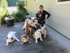 Getting down with the homies in the hood. (Mitzi Szereto) Tags: dogs animals writers bulldogs authors gaberocks mitziszereto teddytedaloo