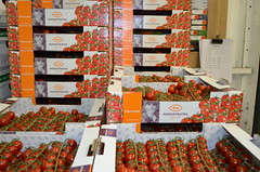 Tomato boxes (huskyteer) Tags: vegetables fruit tomatoes packaging boxes