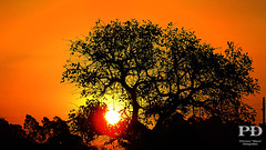 Sunset (Ptruzz Dias) Tags: sunset sky sol pelotas rs riograndedosul rgs