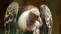 look at me (irene.dijkhuizen) Tags: nature birds zoo close captured