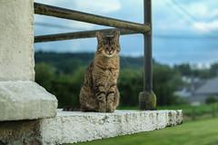 Feline (Lux Obscura) Tags: cat feline wise hypnotized balcony skilful solitude