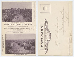 Worth a Trip to Texas Are Our Flowers and Fruits. (SMU Central University Libraries) Tags: fruit flowers figs texas postcards