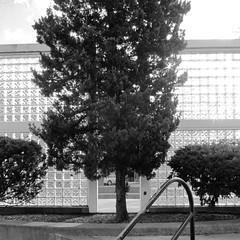 Baum mit Aussicht / Tree With a View (bartholmy) Tags: philadelphia pa banister shrubs baum contrejour busch gegenlicht glassbrick gelnder glasbaustein