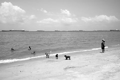 Seafront (kiatography1) Tags: street trees friends sea people urban blackandwhite white black streets beach nature water monochrome by cyclists sand singapore fuji shoreline compositions front human shore fujifilm seafront doggies scenes streetscape contrasts bnw joggers activities x70 eastcoastpark bythebeach fujix70 fujifilmx70