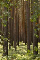 Im Blaubeerwald (Regina_Hoer) Tags: nature photography forrest natur sigma franconia blueberry sd10 wald mittelfranken blaubeeren explored blaubeerwald reginahoer steckerlaswald