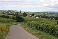 (felix.h) Tags: summer canon landscape eos 50mm hiking villages hike fields rheintal rhein canon50mm18 rheinsteig 400d canoneos400d digitalrebelxti eoskissdigitalx