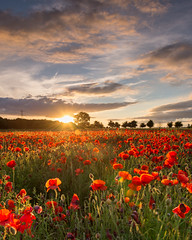 Poppy Field Sunset [EXPLORED] (damiendavis) Tags: uk sunset red summer england sun west flower nature field rural landscape golden countryside dusk farm south poppy poppies wildflowers redsky summerevening cotswold landscapephotography poppyfield thecotswolds outdoorphotography yanworth poppysunset poppyfieldsunset nikond610 poppiessunset