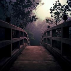 The Bridge (Kenneth Ipcress) Tags: mist 120 6x6 film fog mediumformat kodak vietnam hasselblad ektar carlzeiss 501cm vitnam 80mmf28 planart ektar100 kennyip bnhill
