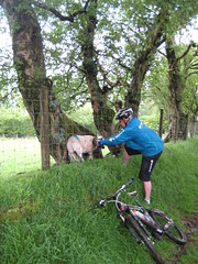If I could talk to the animals. He's not strangling it or trying to eat it, he's freeing it's head from the fence. (neil.finnes) Tags: dorset rough brecon beacons riders