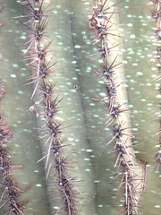 Overlap #30 (Frances Sousa) Tags: cactus art glitter desert doubleexposure dreamy whimsical francessousadecemberportfolio francessousaportfolio