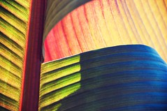 Contours Alive (CarbonNYC [in SF!]) Tags: colorful catchycolors howardlangton leaf veins contour contours lines garden howardlangtoncommunitygarden communitygarden howardlangtongarden howardcommunitygarden howardstreet soma community sanfrancisco sf southofmarket langton langtonstreet howard carbonnyc bayarea california carbonsf