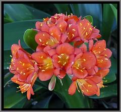 Toowoomba Flowers-038=