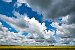 Minnesota (jqk362) Tags: summer cloud nature beautiful beauty field minnesota clouds landscape nikon grain wide wideangle mn 2009 cloudscape nosha ul20090809