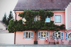 Tree wall (Zaparowana) Tags: street pink house tree green canon germany town 1855mm berching 650d