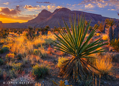 Light My Way (James Neeley) Tags: redrockcanyon sunrise landscape desert lasvegas nevada jamesneeley b2013 lsc2014