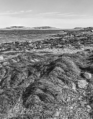 Squantum, MA (Southern New England Photography) Tags: blackandwhite bw beach water monochrome boston canon mono unitedstates massachusetts shoreline newengland northamerica grayscale nocolor efs18135mmf3556is eos70d silverefexpro2 nikcollectionbygoogle