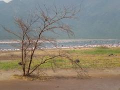 shores of lake bogoria. (GATUHA) Tags: photo wiseacre jimbobedsel naturebestblogcom sheldon1506