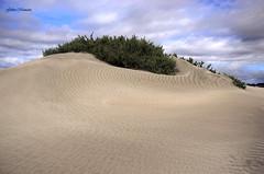 Contrastes (Gabo Monzn - www.gabomonzon.blogspot.com.es/) Tags: beach landscape sand lanzarote playa arena nubes tormenta contraste duna famara vegetacin gabo monzn gabomonzn