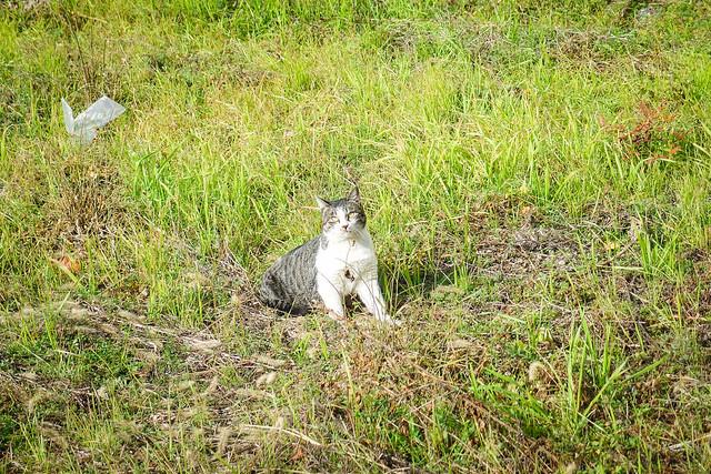 Today's Cat@2013-12-31
