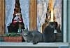 Two brothers (Simply Viola ( Busy +off-on )) Tags: cats animals chats gatos felini felines 猫 katzen gatti animali kates кошки gattiallafinestra impressedbeauty macskák القطط catsonthewindow mygearandme mygearandmepremium mygearandmebronze mygearandmesilver mygearandmegold mygearandmeplatinum mygearandmediamond
