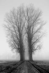 Allee im Nebel #2