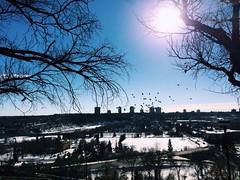 /birdman handrub (paais) Tags: blue winter sky snow ice birds river edmonton flock yeg uploaded:by=flickrmobile flickriosapp:filter=nofilter