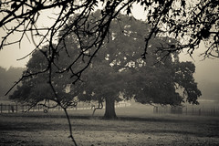 Morning Fog-4.jpg (copazetic) Tags: bw usa tree fog sanantonio texas foggy tamron2875mm winter2014