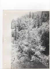 Devil's Canyon Hike (StarmanMike) Tags: california ca usa socal southerncalifornia devilscanyon lacounty losangelescounty sangabrielwilderness sangabrielnationalforest charletownchilaorecreationalarea