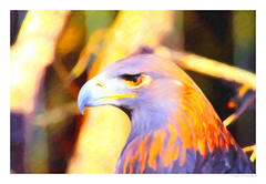 Eagle Eye (SmokinToast) Tags: show camera travel family blue autumn winter light sunset wallpaper portrait usa cloud sun storm abstract southwest color sexy art fall love nature strange beautiful composition america forest photoshop canon painting landscape fire weird photo cool interesting flora friend perfect colorful paint dof shot dynamic skin sweet bokeh pastel awesome alien scenic picture brush romance canvas explore oil romantic 5d iphone compose ipad 2013 snapart santafe newmexico markii