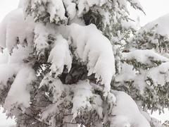 Last Snow Storm (FABOO1918) Tags: camera winter snow toronto ontario canada cold nikon seasons snowstorm fabian mothernature faboo faboo1918 nikoncoolpixp7700 fabmarca fabmarphotographyca