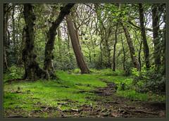 IMG_2090-1 - Green Glade (dangle earrings) Tags: green spring growth pinewoods dangleearings