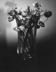 Mother's Day (Giovanni Savino Photography) Tags: life flowers blackandwhite death time mother mothersday deadflowers naturamorta 4x5camera largeformatphotography coffeeprocessing caffenolc magneticart negativepaper giovannisavino coffeephotoprocessing