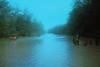 Jalan Sg Nerek (bayualamfoto) Tags: rescue film photography team flood ishootfilm portra masjid kuantan pahang catastrophe filem filmphotography temerloh wakaf filmcommunity believefilm kuantanku banjerosquad