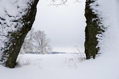 Rahmen (mac.black) Tags: schnee winter plant tree nature flora natur pflanze kalt eis bume baum