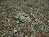 """Ede Gelderla            05-10-2008         40 Km (59) • <a style=""""font-size:0.8em;"""" href=""""http://www.flickr.com/photos/118469228@N03/16421462005/"""" target=""""_blank"""">View on Flickr</a>"""