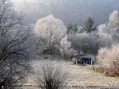 Frozen (Nicote) Tags: world cold west tree forest germany frozen good below temperature february zero morgen guten tübingen moerning