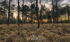 New Forest at Dawn (Emily_Endean_Photography) Tags: uk morning trees england nature start forest sunrise dawn countryside woods nikon wildlife south hampshire rhinefield wilflife