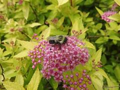 DSC00685 (gregnboutz) Tags: flowers flower macro macros springflowers brightflowers pinkflowers macroflowers macroflower bloomingflower bloomingflowers colorfulmacros