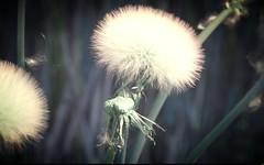 Ballade avec du vent (11) (Sebmanstar) Tags: travel france color nature forest alpes french landscape photography photo europa europe pentax explore cote provence paysage campagne couleur ballade forêt dazur exterieur