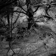 In Canyons 098 (noahbw) Tags: trees blackandwhite bw abstract blur monochrome rock stone forest square landscape blackwhite spring woods nikon dof natural path branches roots canyon starvedrockstatepark d5000 noahbw
