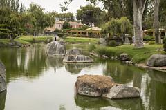 Paseo a La Serena (ElBroka bicicletea por Auckland) Tags: chile trip viaje plants building tree bird nature animal walk ave laserena 2016 canon6d tamron2470mmf28