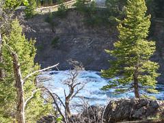 BanffNatlPk162 (alicia.garbelman) Tags: canada waterfalls alberta rockymountains bowriver bowfalls banffnationalpark