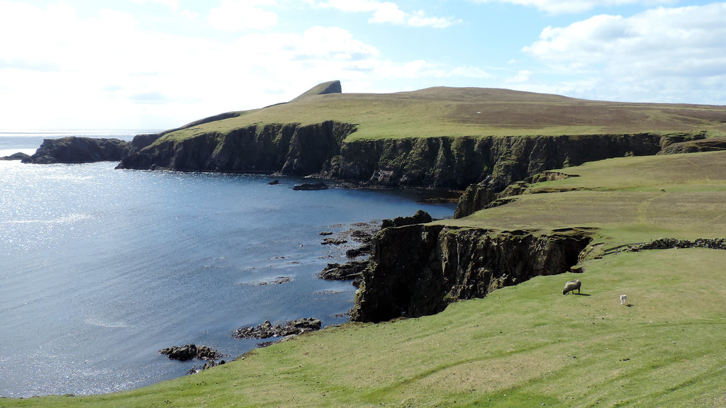The World's newest photos of fairisle and sheep - Flickr Hive Mind