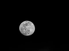 Pretty moon tonight (Ed Rosack) Tags: sky usa cloud moon florida cloudy clear astronomy centralflorida edrosack